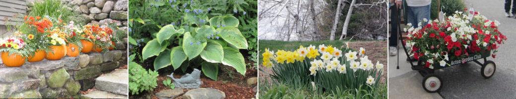 Boston Flower Show – The Acton Garden Club on garden club underwater designs, blue ribbon garden club designs, garden club flower show designs,